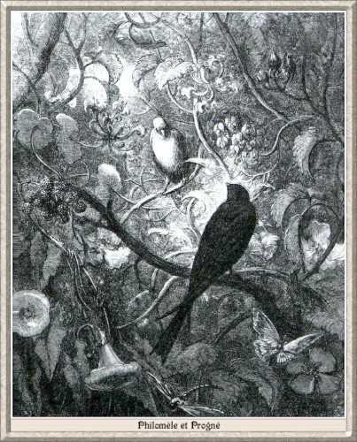 Illustration-Gustave-Doré-Philomele-et-Progne